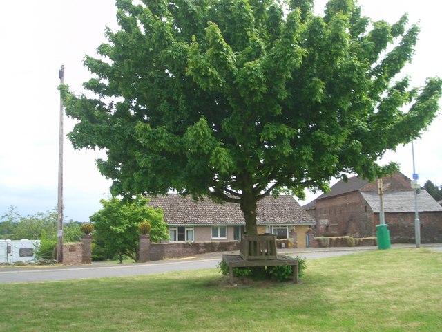 Seat & Tree, Beaumont