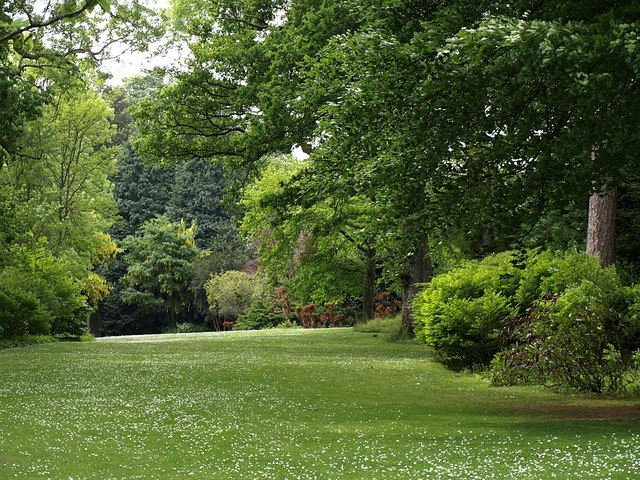 The Glade, Dartington Hall Gardens