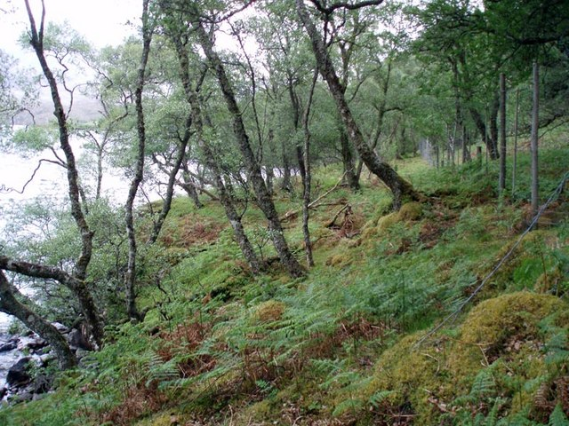 Deer fences on northern edge of Eilean Mòr