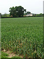 TG0629 : Popham's Farm by Evelyn Simak