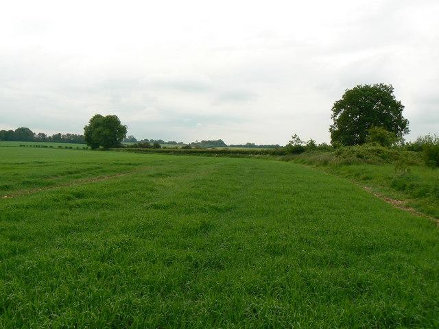Dummer Countryside