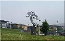 NZ4057 : Tree sculpture on entering St Peter's Campus by Steve  Fareham