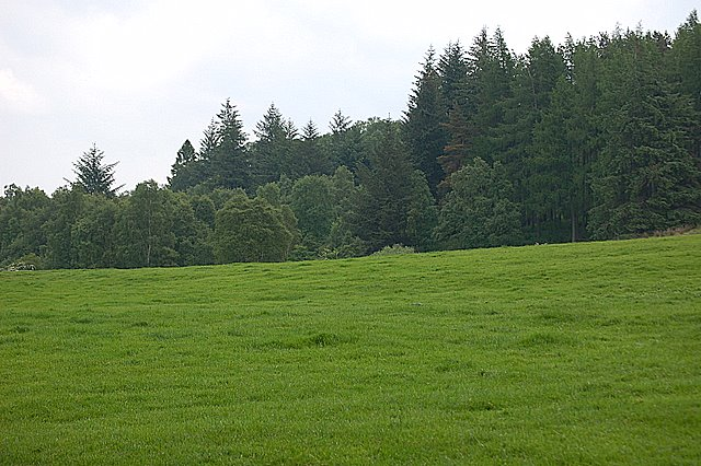 Farmland and woods by Paul McIlroy