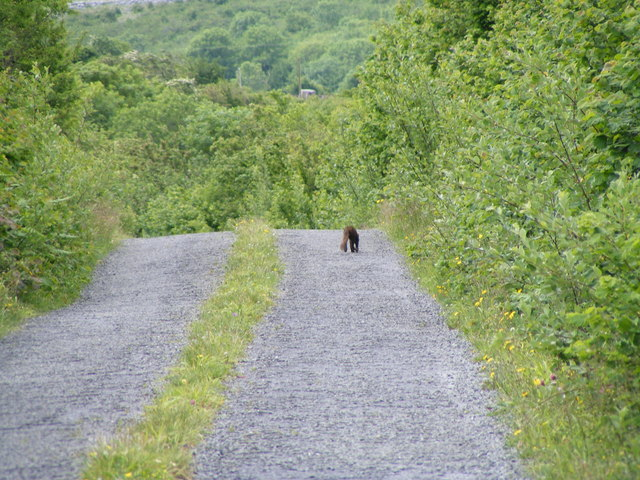 Road from Cappagh to Glencolumcille - Cappagh Townland