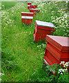 TA0244 : Fieldside hives near Arram by Paul Harrop