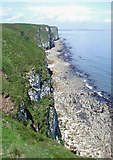 TA2272 : North Cliff, Flamborough by Paul Glazzard