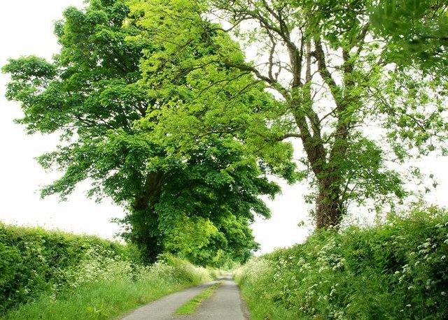 The Springmount Road near Kinallen (2)