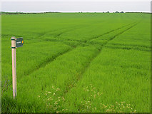 SU4984 : Farmland above Chilton by Andrew Smith