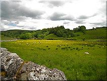 SD9062 : Malham: wet meadow by Martyn Gorman