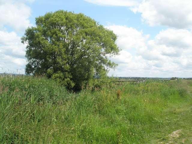 Lone tree approaching the Environment Agency bridge