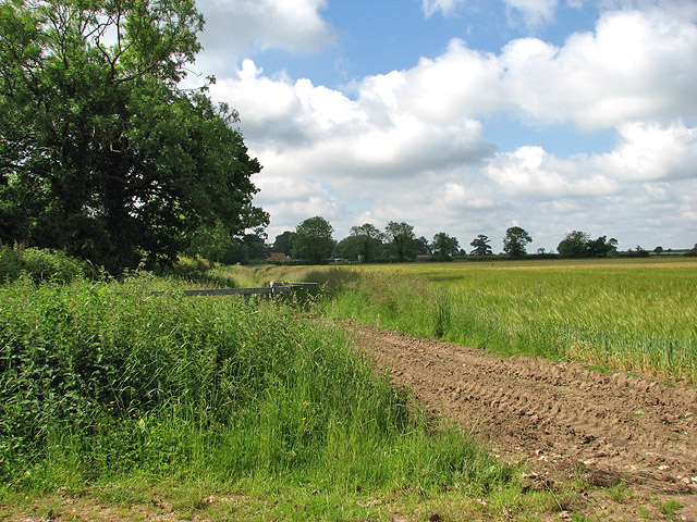 Barleyfield beside Hingham Road