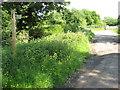 SO9657 : Bridleway to Jaspers Farm, Grafton Flyford by Philip Halling