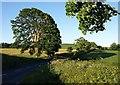 SX8461 : Trees by Totnes Road by Derek Harper