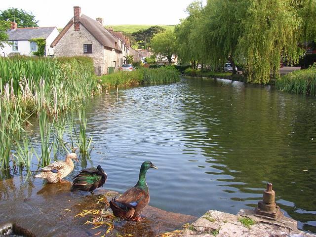 The mill pond, Sutton Poyntz