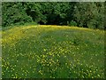 SO7978 : Buttercups at Easthams Coppice by Mat Fascione