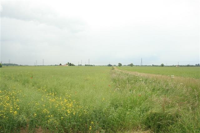 Towards Broading Farm