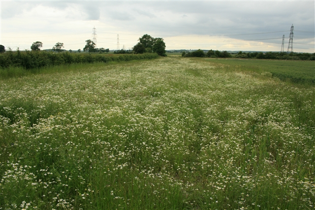 Field margin, Shortley's Road