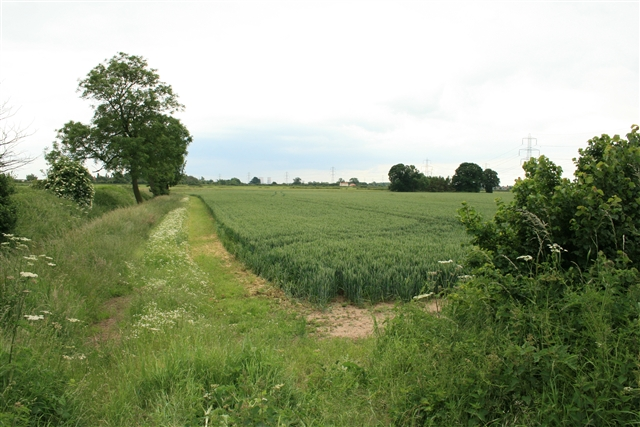 Wheat field, north of Laneham