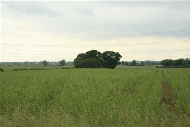 Small copse, north of Laneham