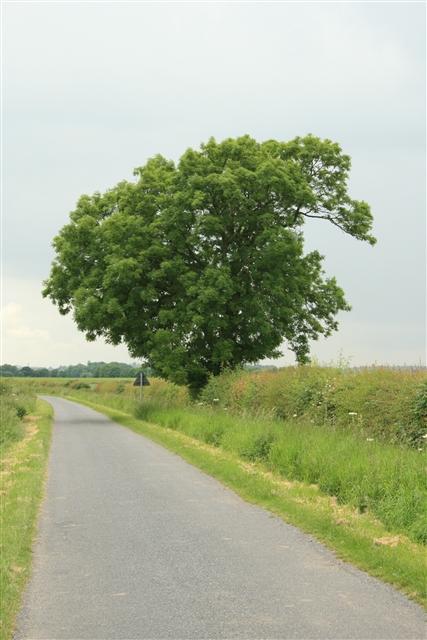 Tree, Helenship Lane