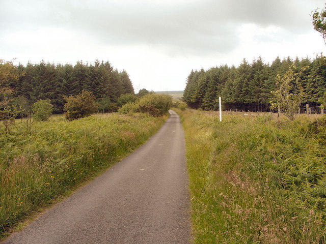 Mountain lane and conifers to the south of Llangynwyd