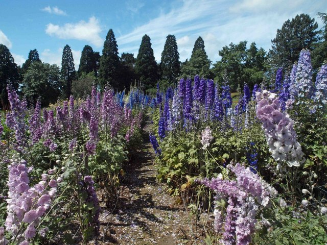 Delphiniums on trial