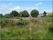 SZ0895 : Redhill: looking across the common by Chris Downer