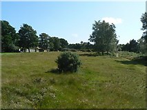 SZ0895 : Redhill: heath on the common by Chris Downer