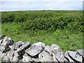M2501 : Scrubby Burren flat with drystone wall at track verge by C Michael Hogan