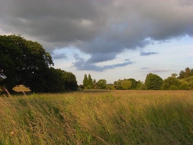 Meadow, Compton