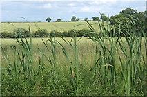 TM2754 : Fields near Dallinghoo, looking east by Andrew Hill