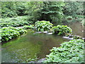 SK1452 : Dovedale - River Dove by Alan Heardman