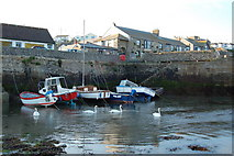 SW6225 : Swans in Porthleven Harbour by Mari Buckley