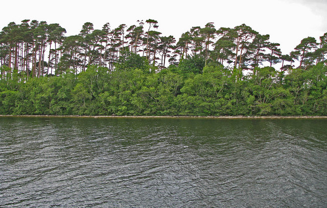 A portion of the northern shoreline of Inchagoill Island in Lough Corrib