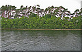 M1349 : A portion of the northern shoreline of Inchagoill Island in Lough Corrib by C Michael Hogan