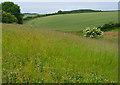 SE9637 : Flowery Dale - western end by Paul Harrop