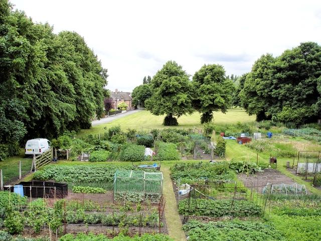 Allotment gardens and recreation area beside Birdcage Walk