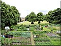 SJ6573 : Allotment gardens and recreation area beside Birdcage Walk by Mike Harris