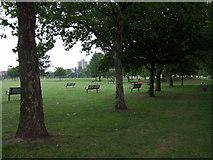 TQ3283 : Trees in Shoreditch Park by ceridwen