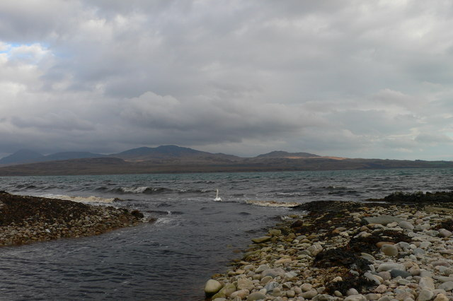 Swans at the Mouth of Lub Gleann Logain