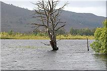 NH9617 : Golden Eye nest box dead pine Loch Mallachie by jeff collins