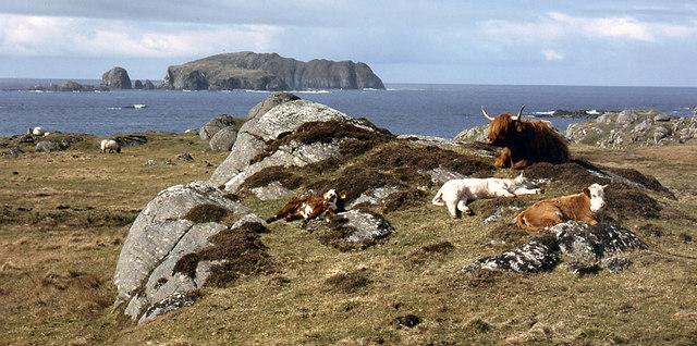 Cattle above Bosta beach