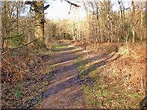 SU2067 : Savernake Forest by P L Chadwick