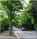 J3673 : Cyprus Avenue, Belfast by Rossographer