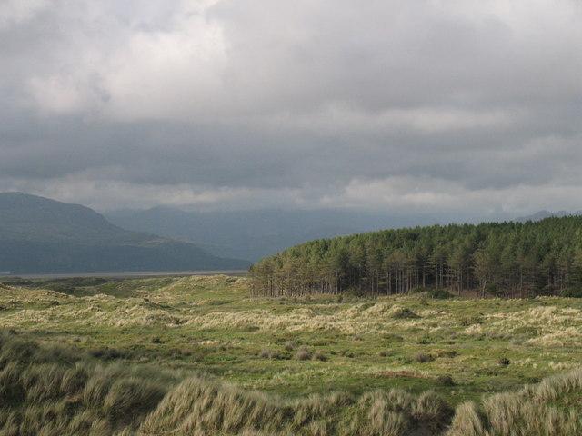 Morfa Harlech Forestry