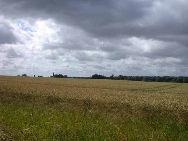 Wheat field south of byway