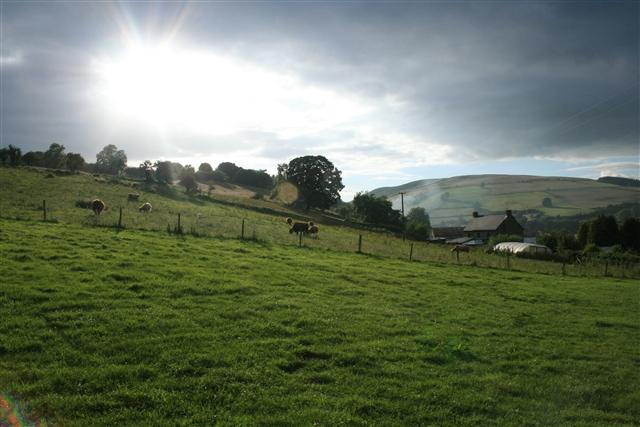 Highland cattle, New House Farm