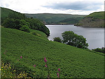 SN7849 : Clearing by the side of Llyn Brianne by Rudi Winter
