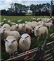 TA1449 : Nunkeeling flock by Paul Harrop