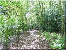 SO5212 : Offa's Dyke Path by Jonathan Billinger